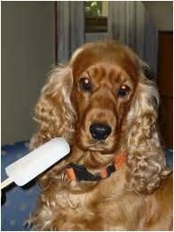cane - Scipione, Caronte e Minosse: come difendersi dal caldo
