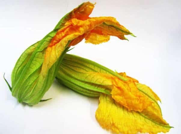 fiori di zucca 1 - Fiori di Zucca con sorpresa