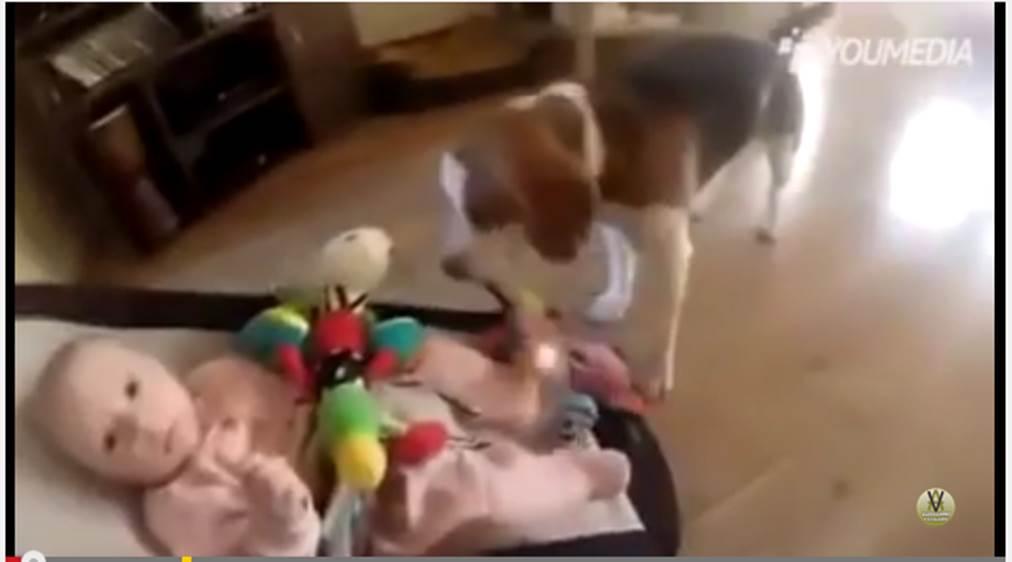 Charlie e la bimba - Cagnolino ruba un gioco ad una bimba che piange, ecco come rimedia