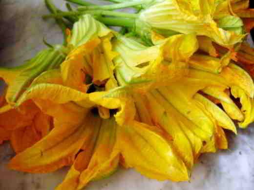 fiori di zucca con mozzarella e alici