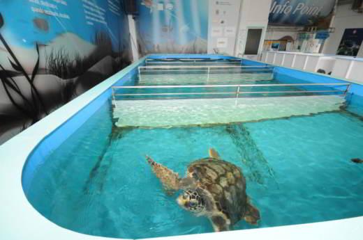 Ospedale delle tartarughe