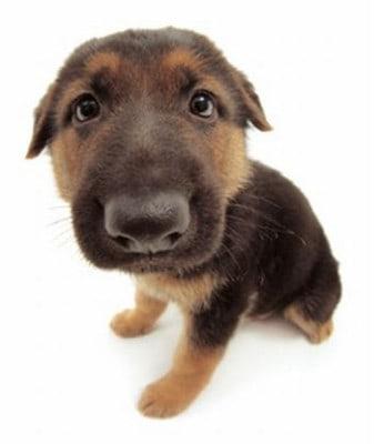 cane annusa - Lettera a Babbo Natale di un bimbo di 41 anni
