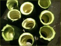 zucchine1 - Zucchine ripiene alla l'ho fatto io!
