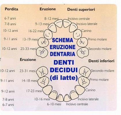 I denti decidui