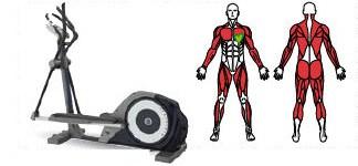 Muscoli sviluppati con la bici ellittica