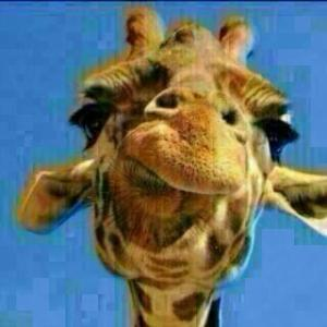 giraffa - L'indovinello della Giraffa spopola su WhatsApp