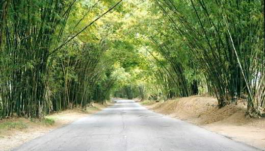 Bamboo Evenue