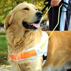 Risposta cane guida
