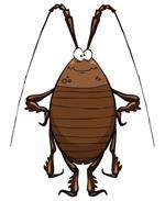 Risposta scarafaggio