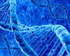 Risposta DNA