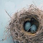 Risposta nido