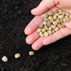 Risposta semi