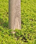 Risposta tronco