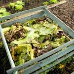 Risposta compost