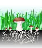 Risposta micelio