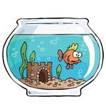 Risposta acquario