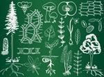 Risposta botanica