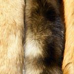 Risposta pelliccia