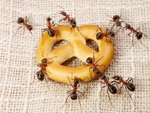 Come difendersi dalle formiche in casa