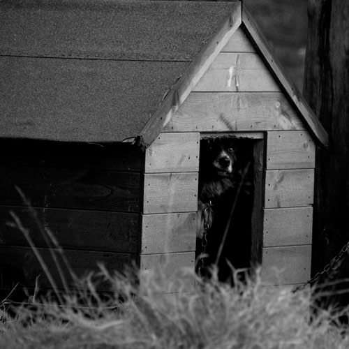 Ambienti answer: KENNEL