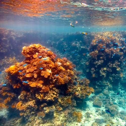 Ambienti answer: CORAL REEF