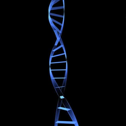 Anatomia answer: DNA
