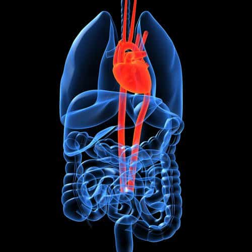 Anatomia answer: CUORE