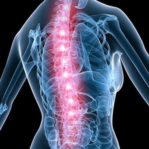 Anatomia answer: SPINA DORSALE