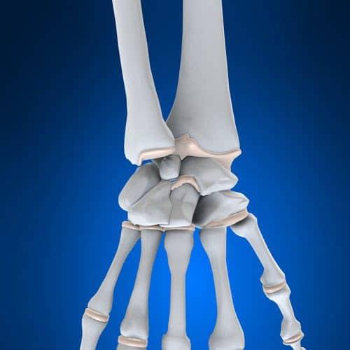 Anatomia answer: POLSO