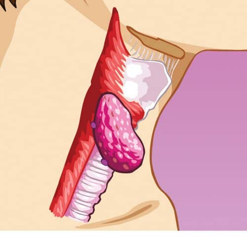Anatomia answer: GOLA