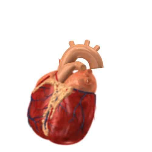 Anatomia answer: AORTA