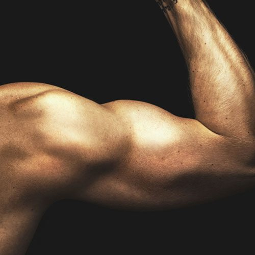 Anatomia answer: BICIPITE