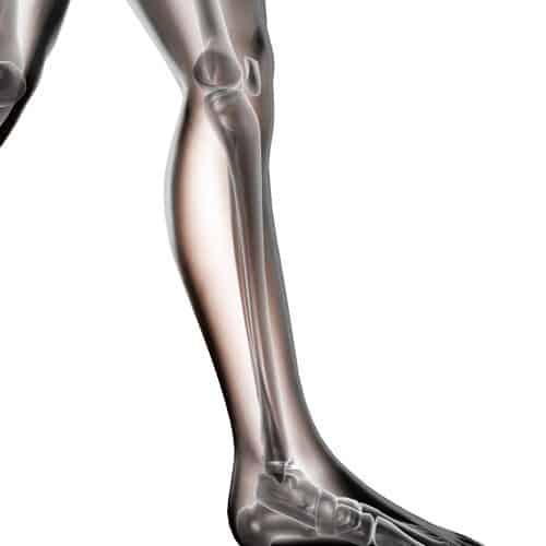 Anatomia answer: PERONE