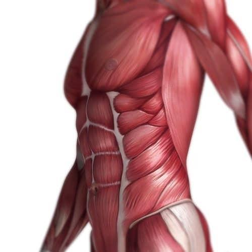 Anatomia answer: ADDOMINALI