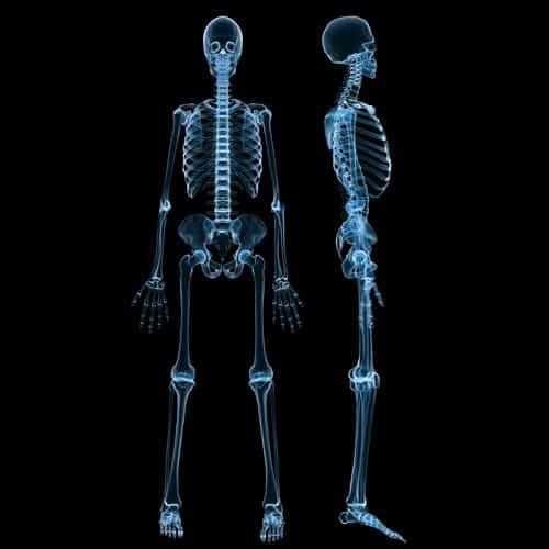 Anatomia answer: SCHELETRO