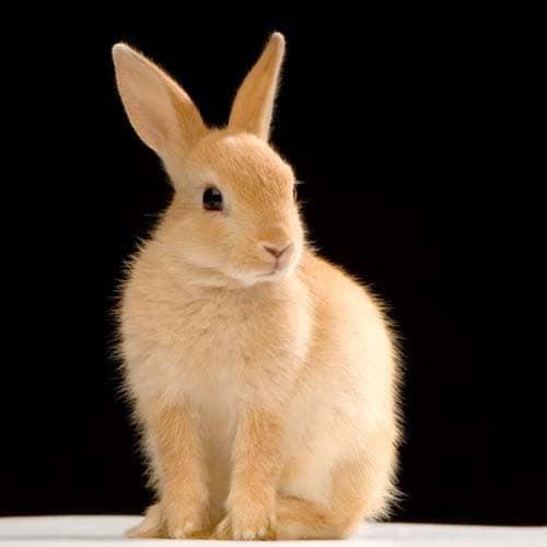 Animali answer: CONIGLIERA