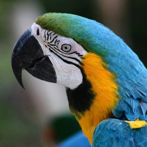 Animali answer: PAPPAGALLO