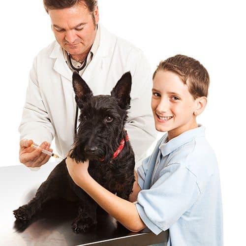 Mondo Cuccioli answer: VACCINAZIONE