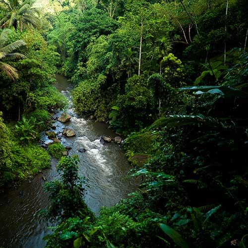 Natura answer: FORESTA