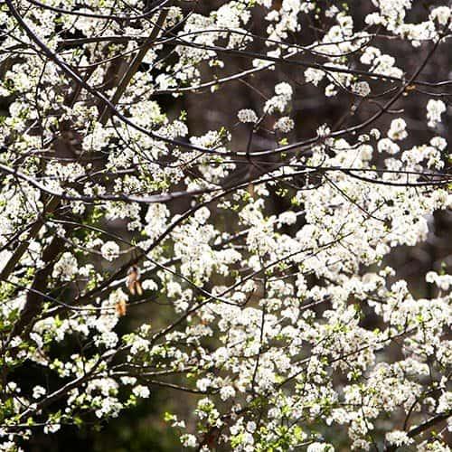 Primavera answer: FIORE