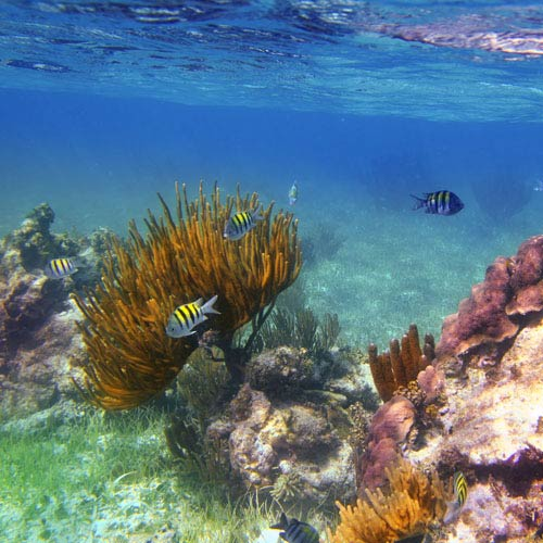 Vacanza answer: CORAL REEF
